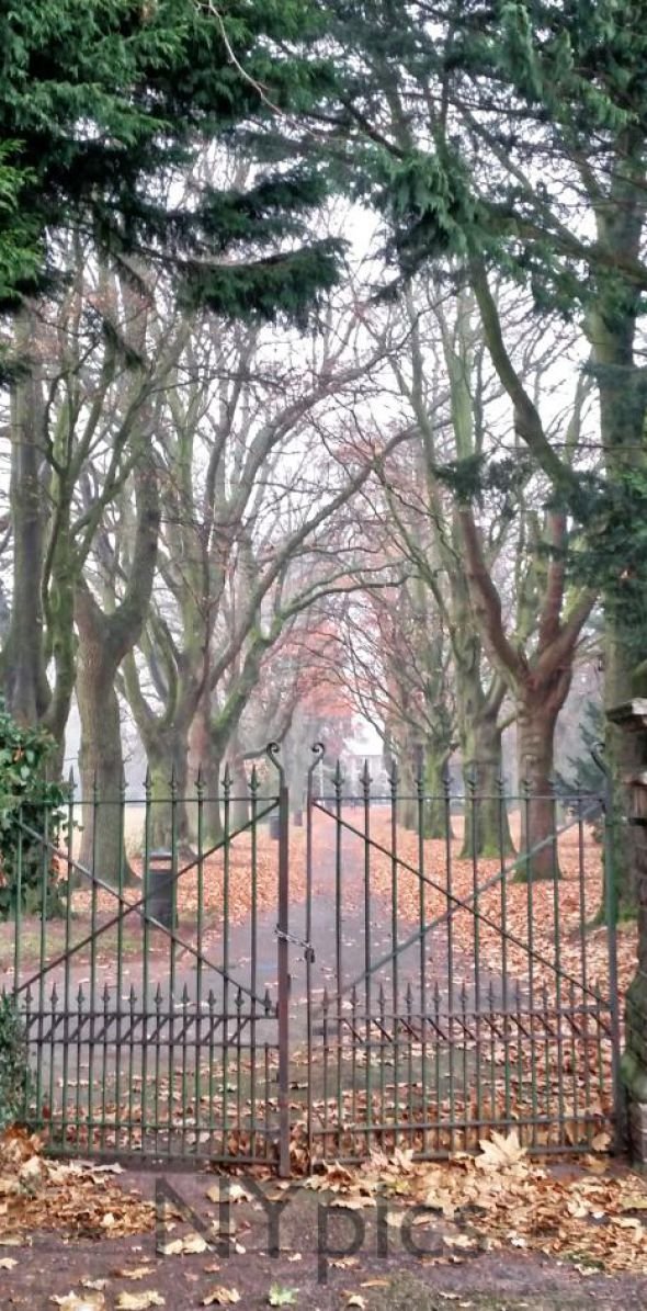 Tree Lined Path At Bailey Park Abergavenny