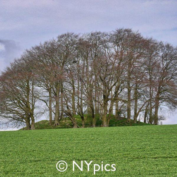 Tumulus Near Avebury