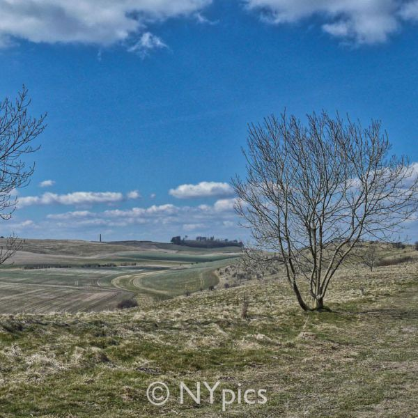 Knoll Down On The Wessex Ridgeway, Near Avebury.