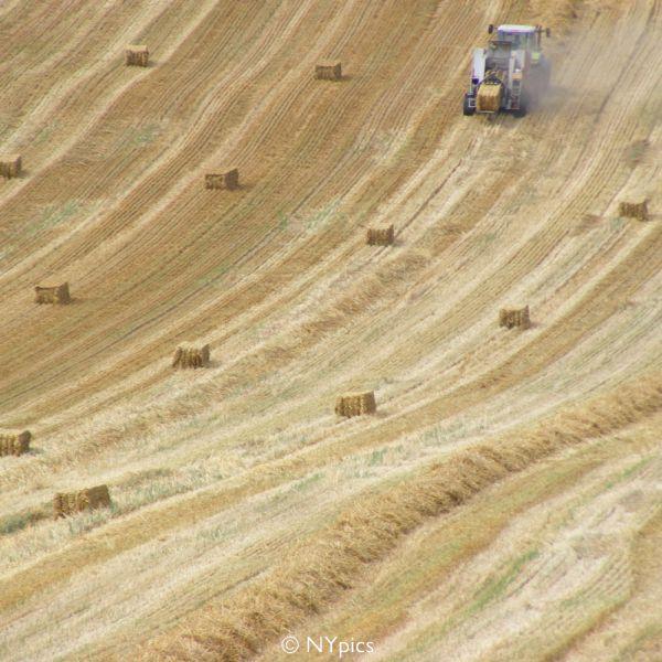 Haymaking In The Surrey Hills