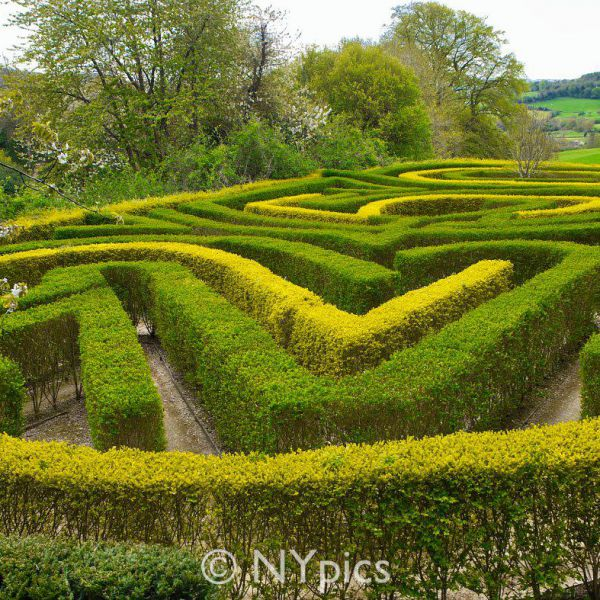 250 Hedge Maze At at The Rococo Garden, Gloucestershire