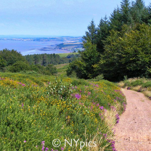 The Walk From Wootton Courtenay to Dunster