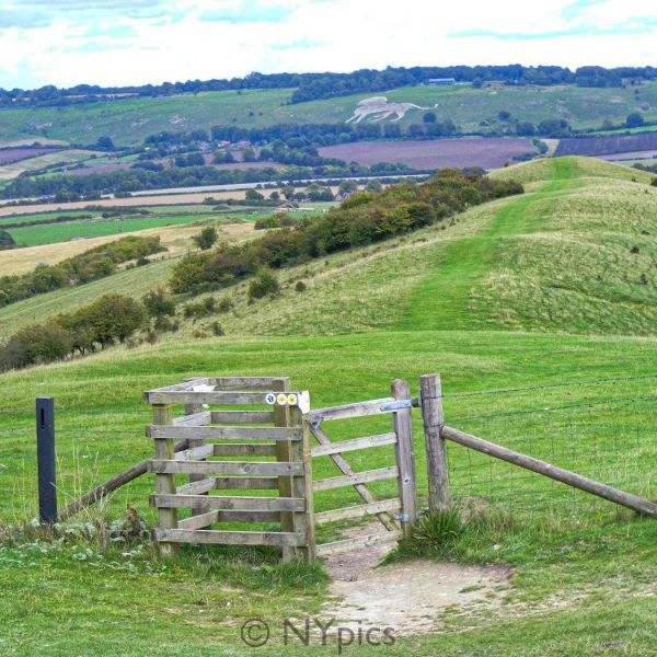 Whipsnade Zoo's Giant Lion Hill Figure Seen From Ivinghoe Beacon