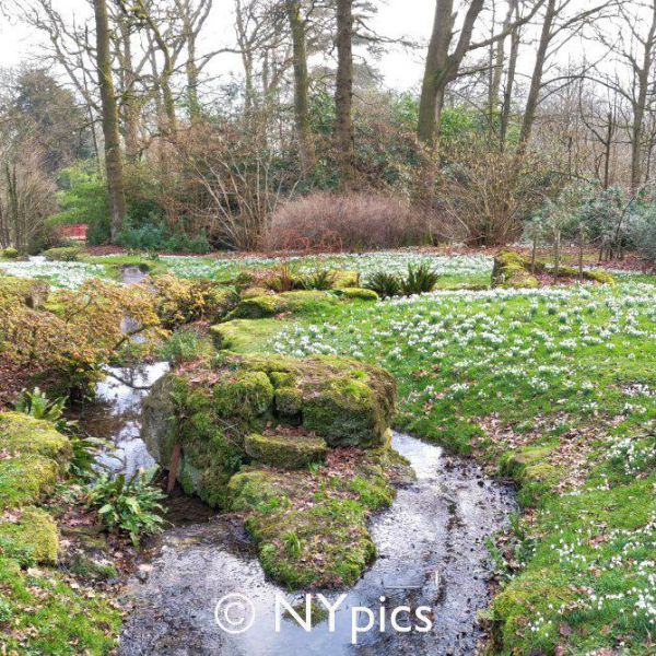 Snowdrops In The Grounds Of Batsford House,