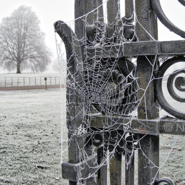 Frosty Cobwebs On Old Cast Iron Gates