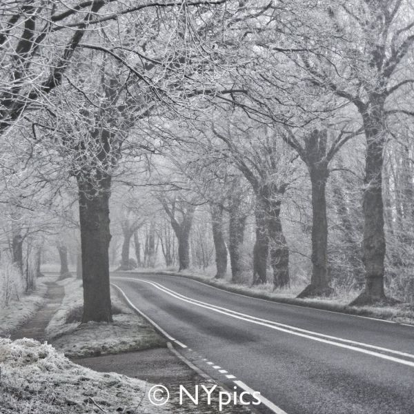 Frosty Tree Lined Road