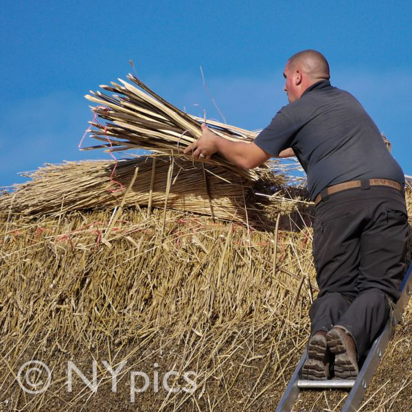 Thatcher Working On A Barn Roof